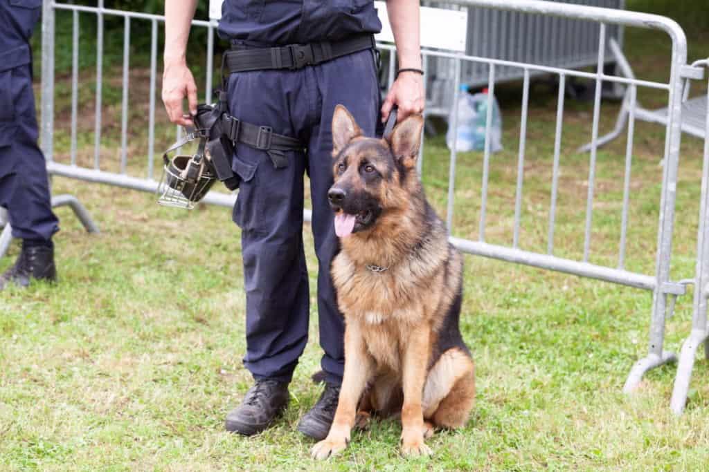 Border Guard Policemen with Dog